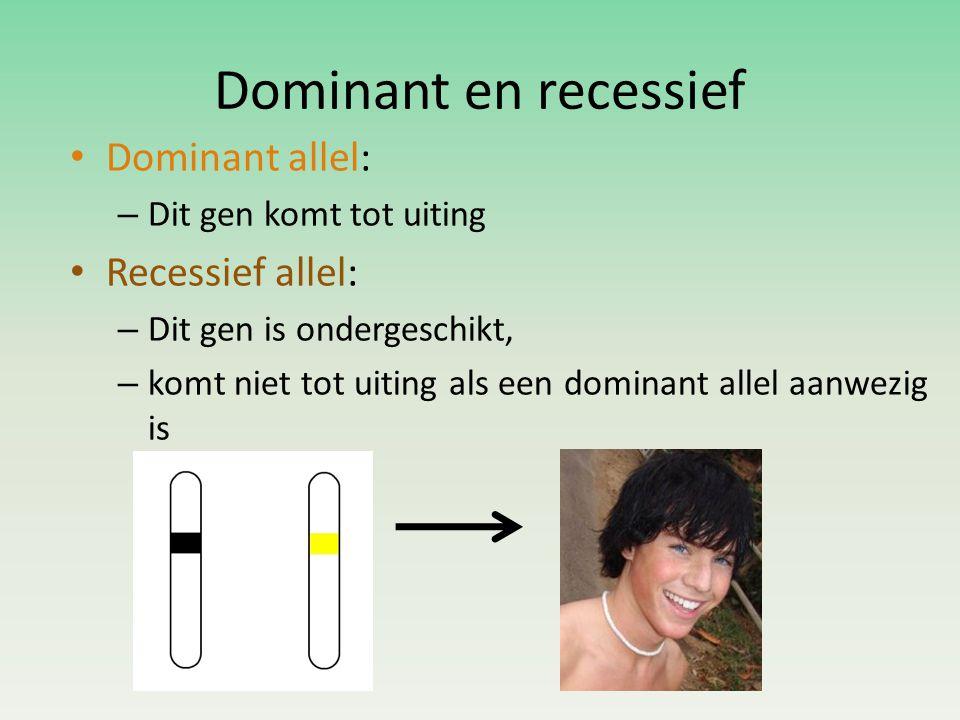 Dominant en recessief Dominant allel: Recessief allel: