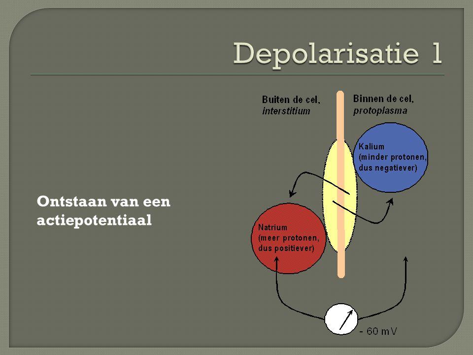 Depolarisatie 1 Ontstaan van een actiepotentiaal