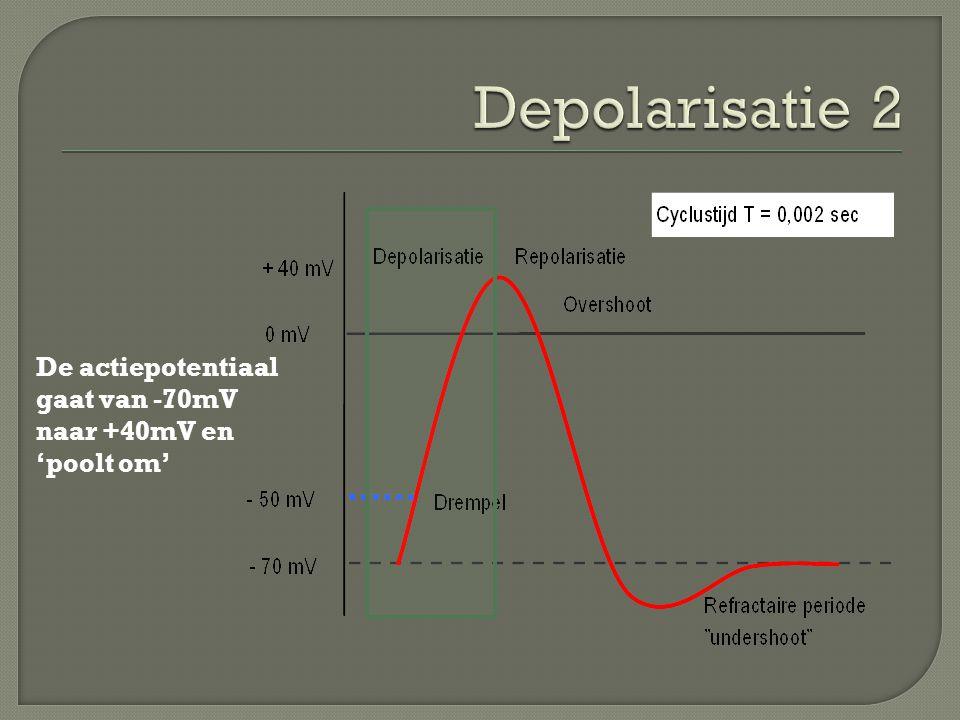 Depolarisatie 2 De actiepotentiaal gaat van -70mV naar +40mV en 'poolt om'