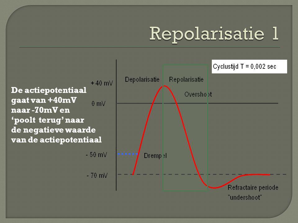 Repolarisatie 1 De actiepotentiaal gaat van +40mV naar -70mV en 'poolt terug' naar de negatieve waarde.