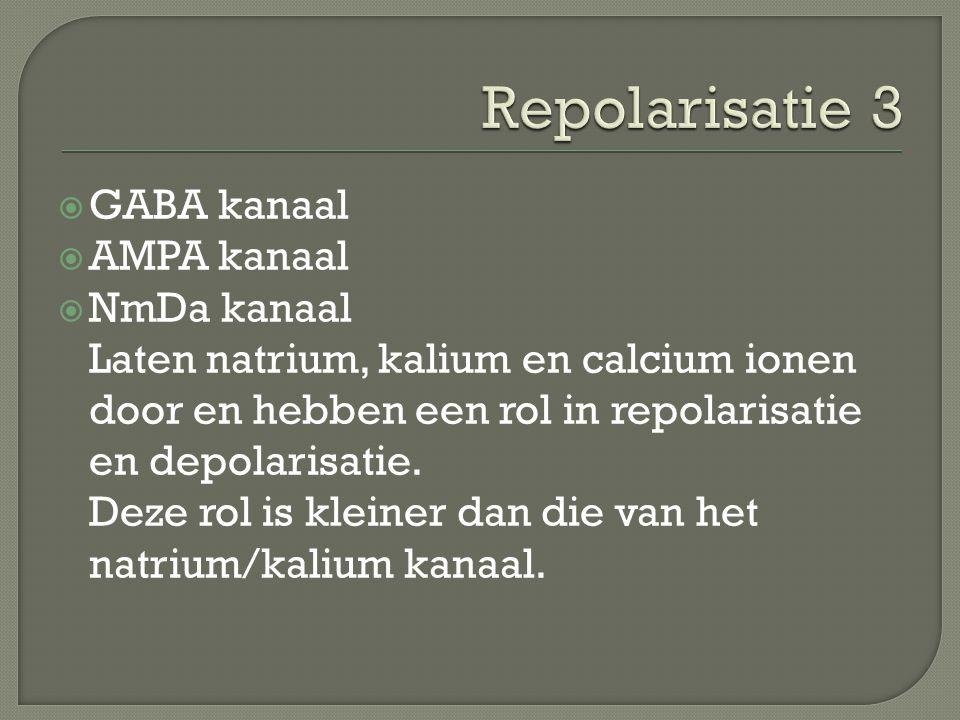 Repolarisatie 3 GABA kanaal AMPA kanaal