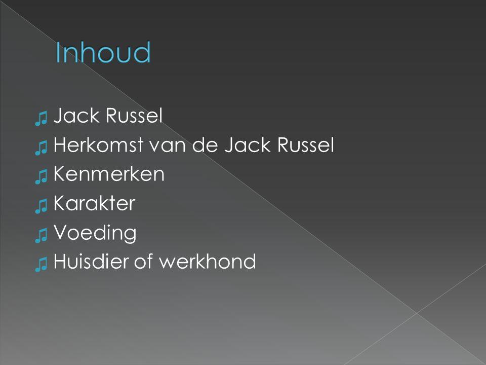 Inhoud Jack Russel Herkomst van de Jack Russel Kenmerken Karakter