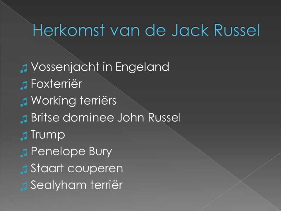 Herkomst van de Jack Russel
