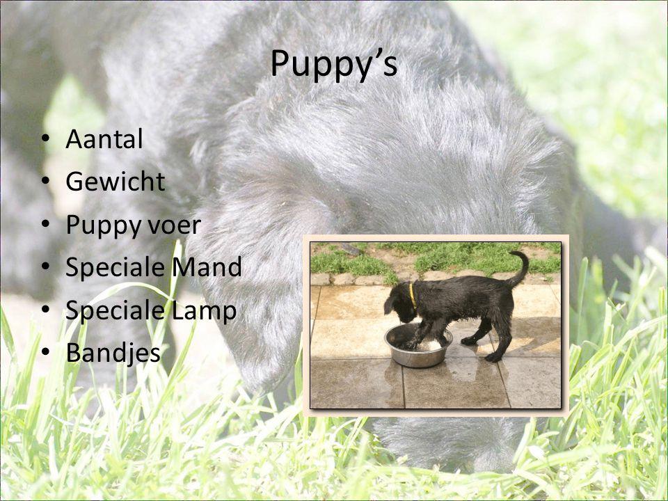 Puppy's Aantal Gewicht Puppy voer Speciale Mand Speciale Lamp Bandjes