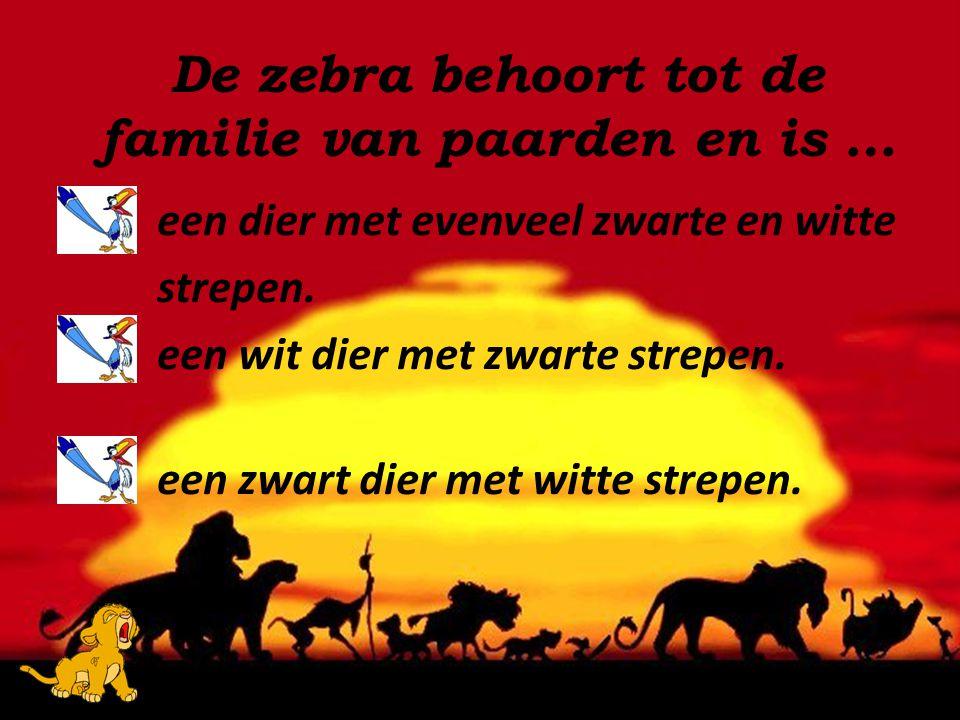 De zebra behoort tot de familie van paarden en is …