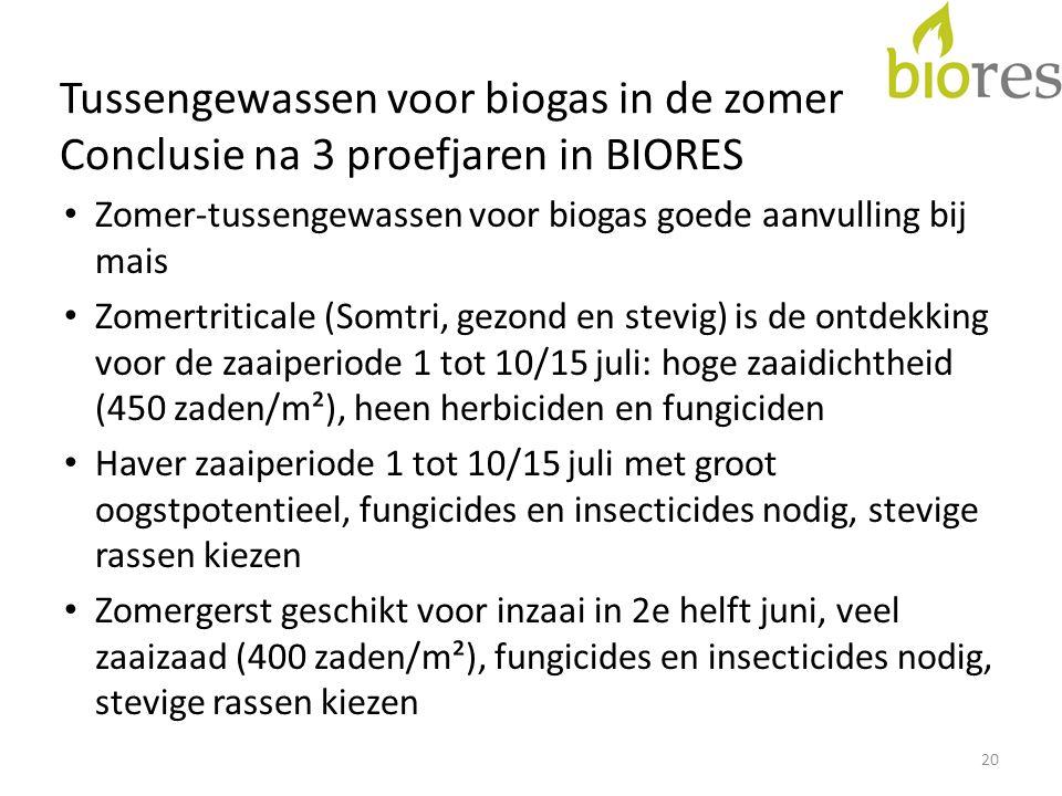 Tussengewassen voor biogas in de zomer Conclusie na 3 proefjaren in BIORES