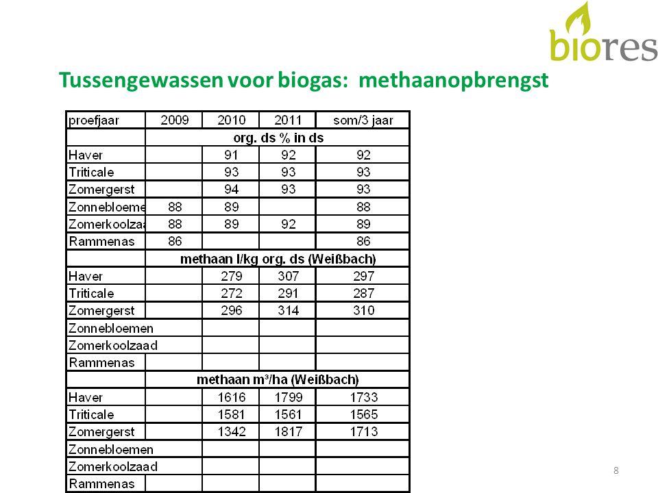 Tussengewassen voor biogas: methaanopbrengst