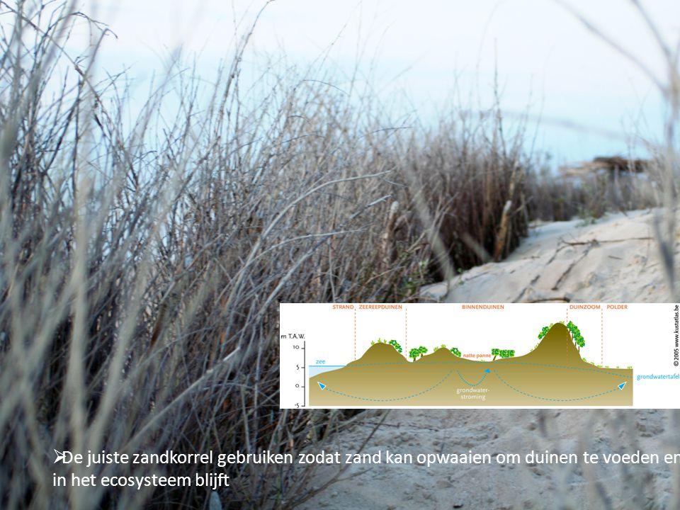 De juiste zandkorrel gebruiken zodat zand kan opwaaien om duinen te voeden en in het ecosysteem blijft