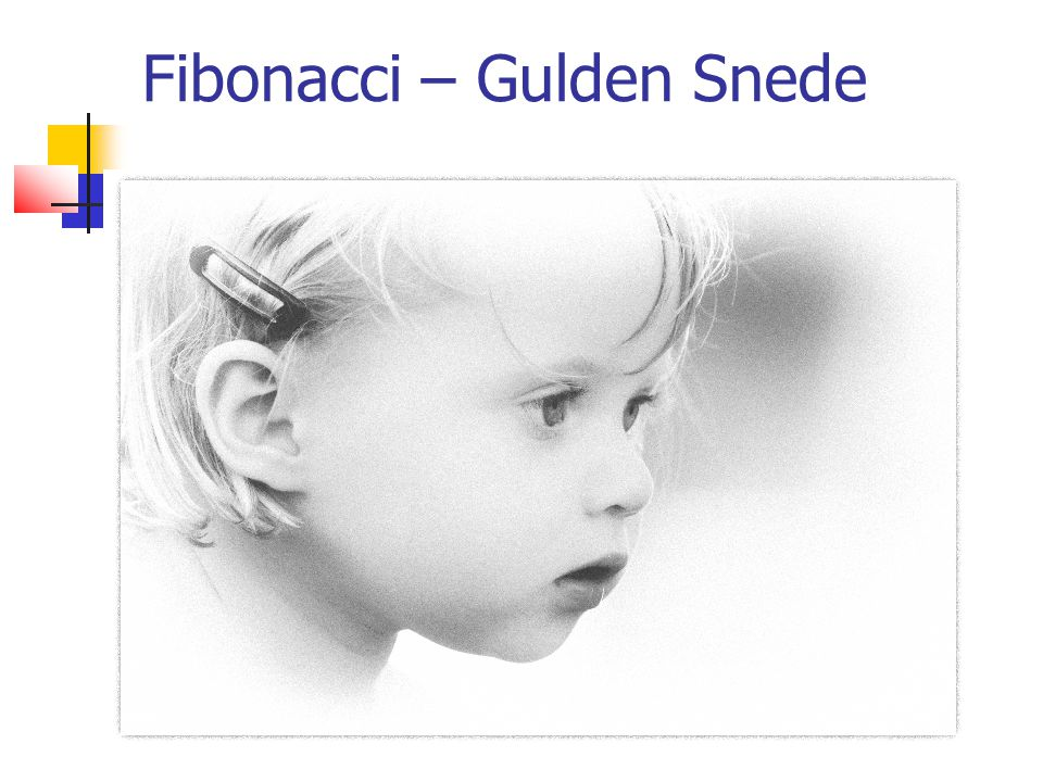 Fibonacci – Gulden Snede