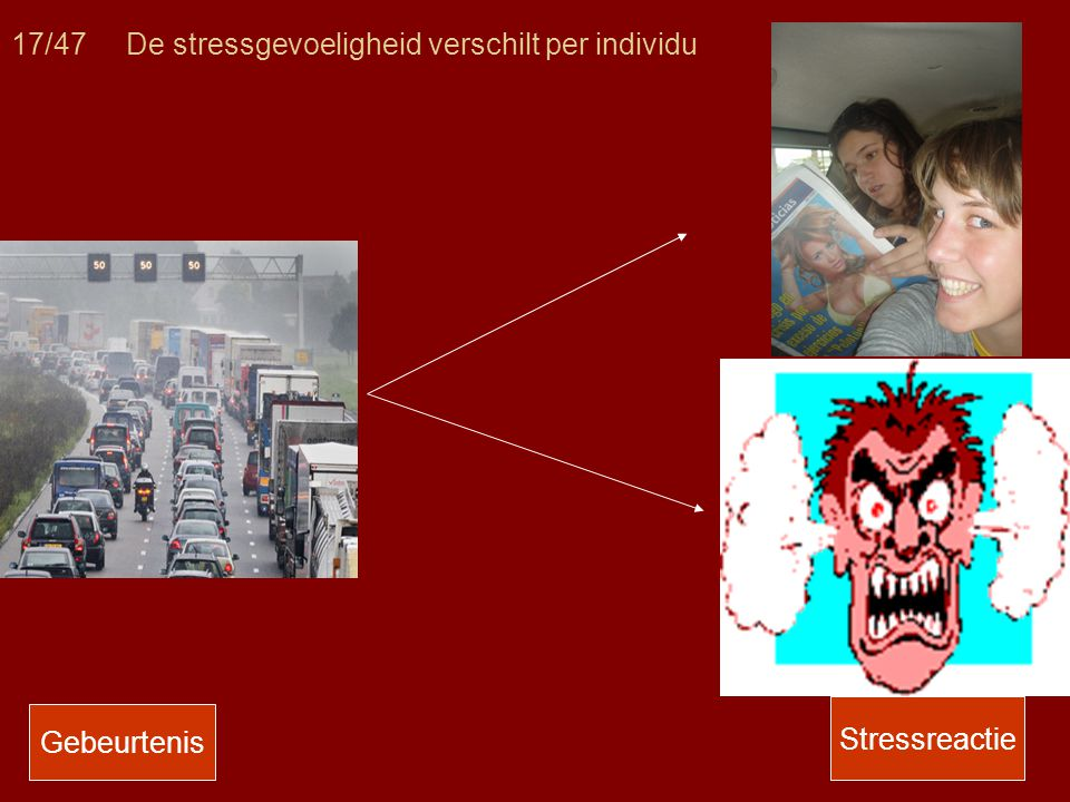17/47 De stressgevoeligheid verschilt per individu