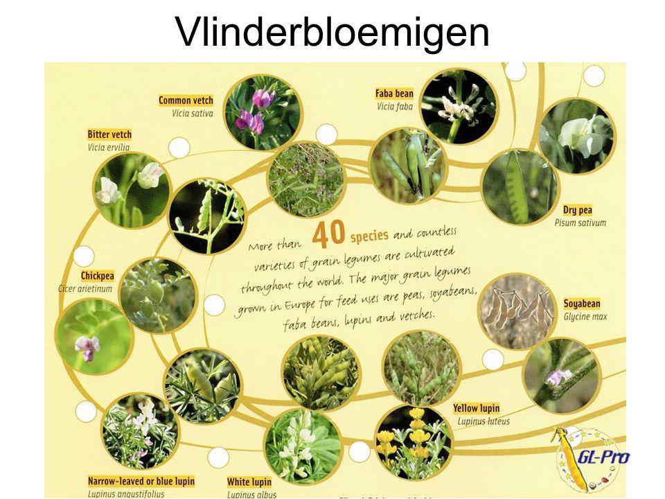 Vlinderbloemigen alternatieve eiwitten - 9 oktober 2008