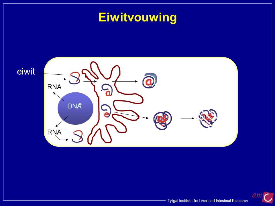 Eiwitvouwing eiwit RNA DNA RNA