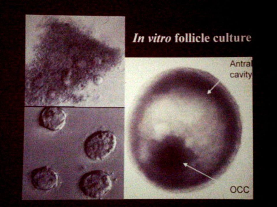 Bij in vitro maturatie zal de oocyte buiten het menselijk lichaam worden opgekweekt, echter door de ingewikkelde processen zijn hierbij vooralsnog geen reele resultaten beschreven in humane studies.