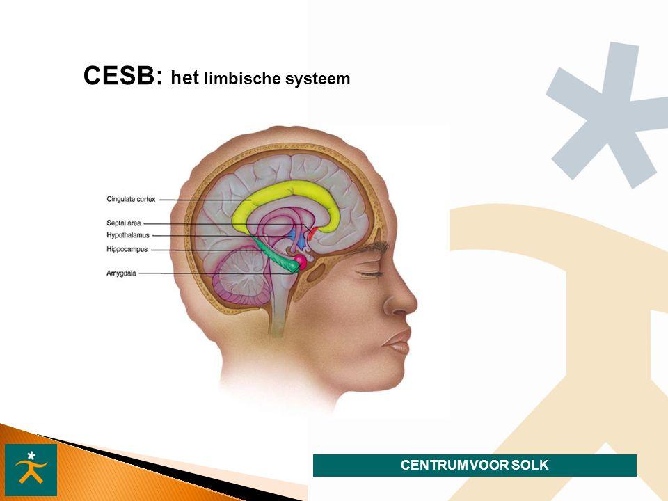 CESB: het limbische systeem