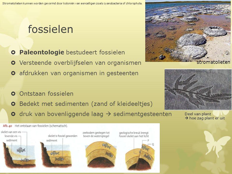 fossielen Paleontologie bestudeert fossielen