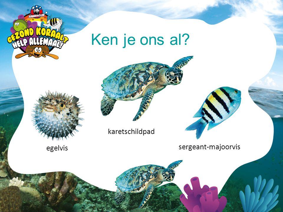 Ken je ons al karetschildpad egelvis sergeant-majoorvis