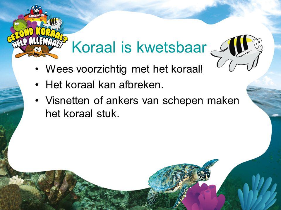 Koraal is kwetsbaar Wees voorzichtig met het koraal!