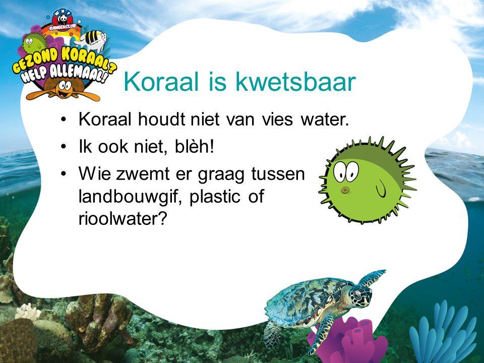 Koraal is kwetsbaar Koraal houdt niet van vies water.