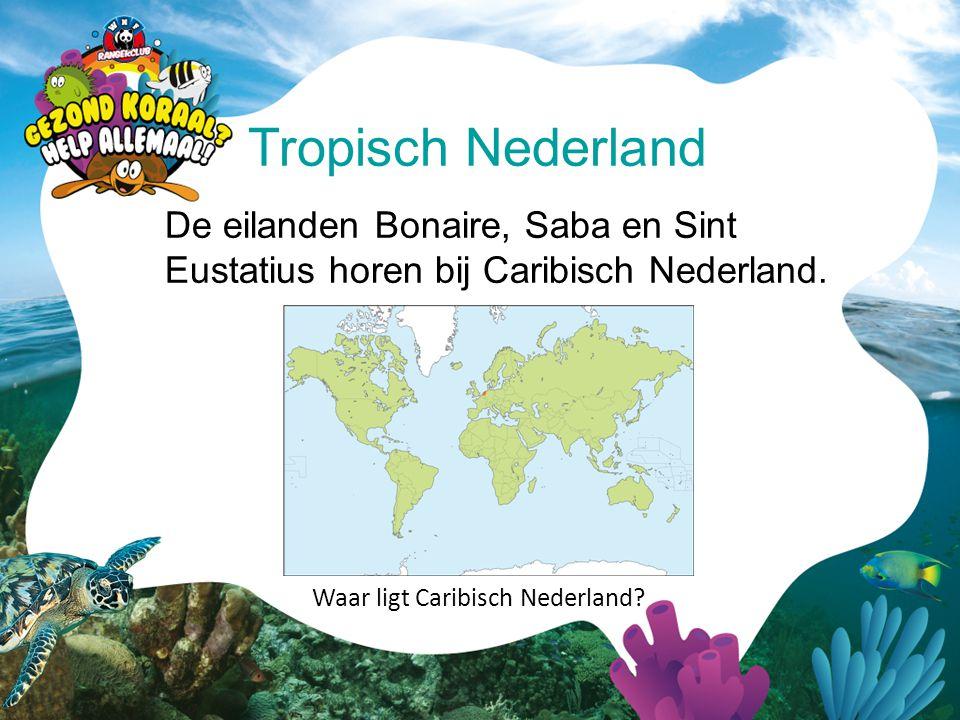 Tropisch Nederland De eilanden Bonaire, Saba en Sint Eustatius horen bij Caribisch Nederland.
