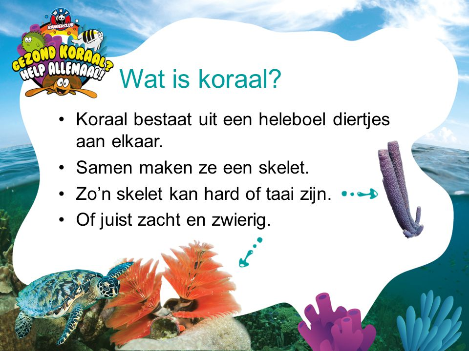 Wat is koraal Koraal bestaat uit een heleboel diertjes aan elkaar.