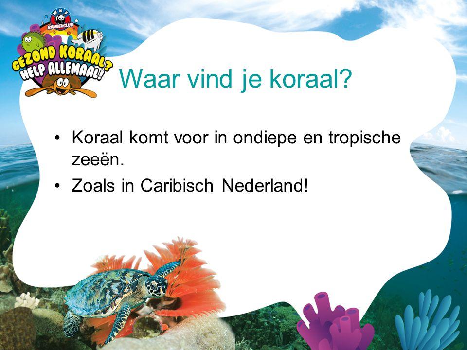 Waar vind je koraal Koraal komt voor in ondiepe en tropische zeeën.