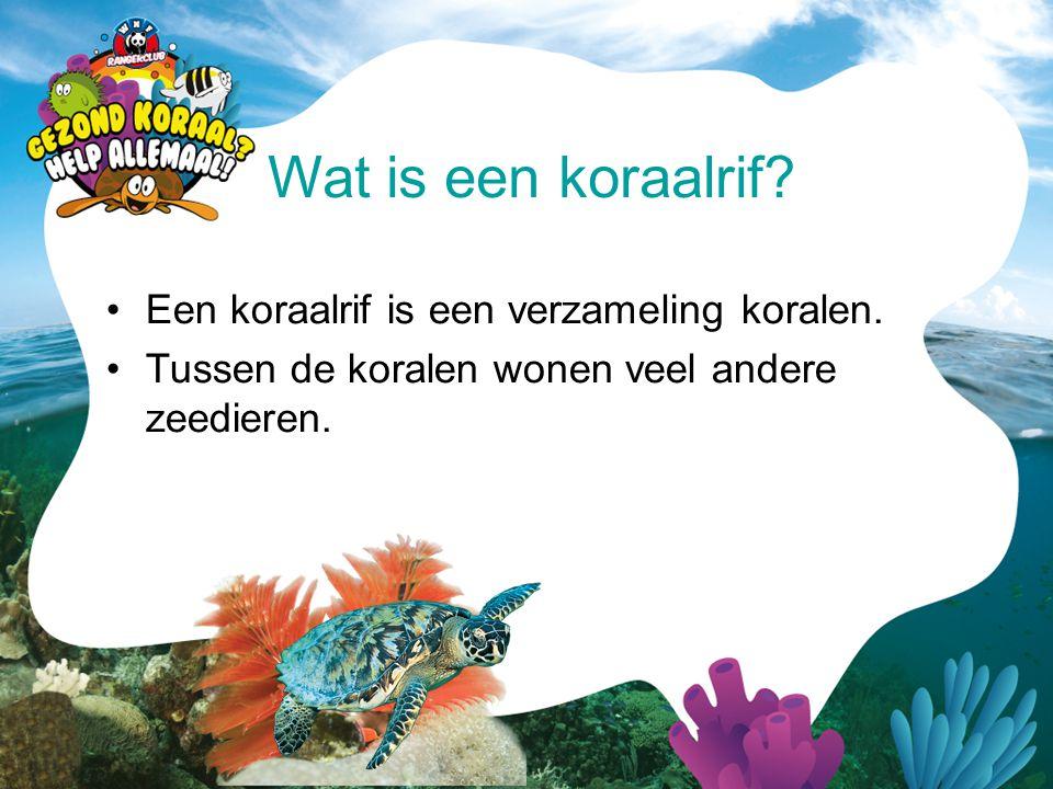 Wat is een koraalrif Een koraalrif is een verzameling koralen.