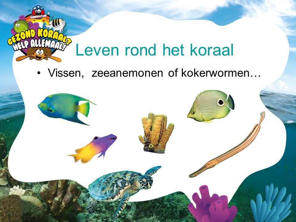 Leven rond het koraal Vissen, zeeanemonen of kokerwormen…
