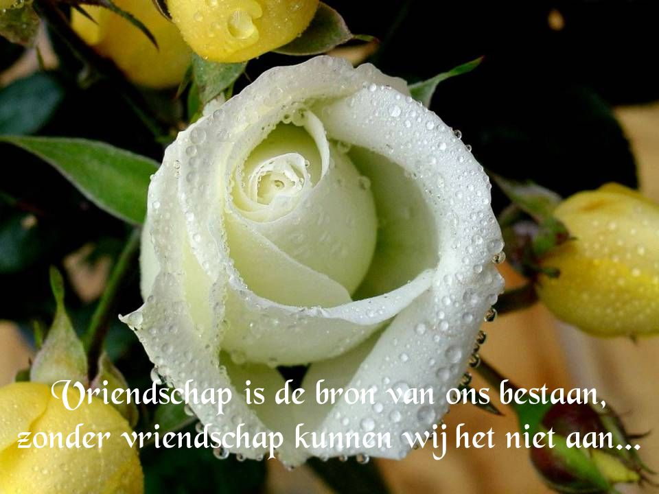 Vriendschap is de bron van ons bestaan, zonder vriendschap kunnen wij het niet aan...