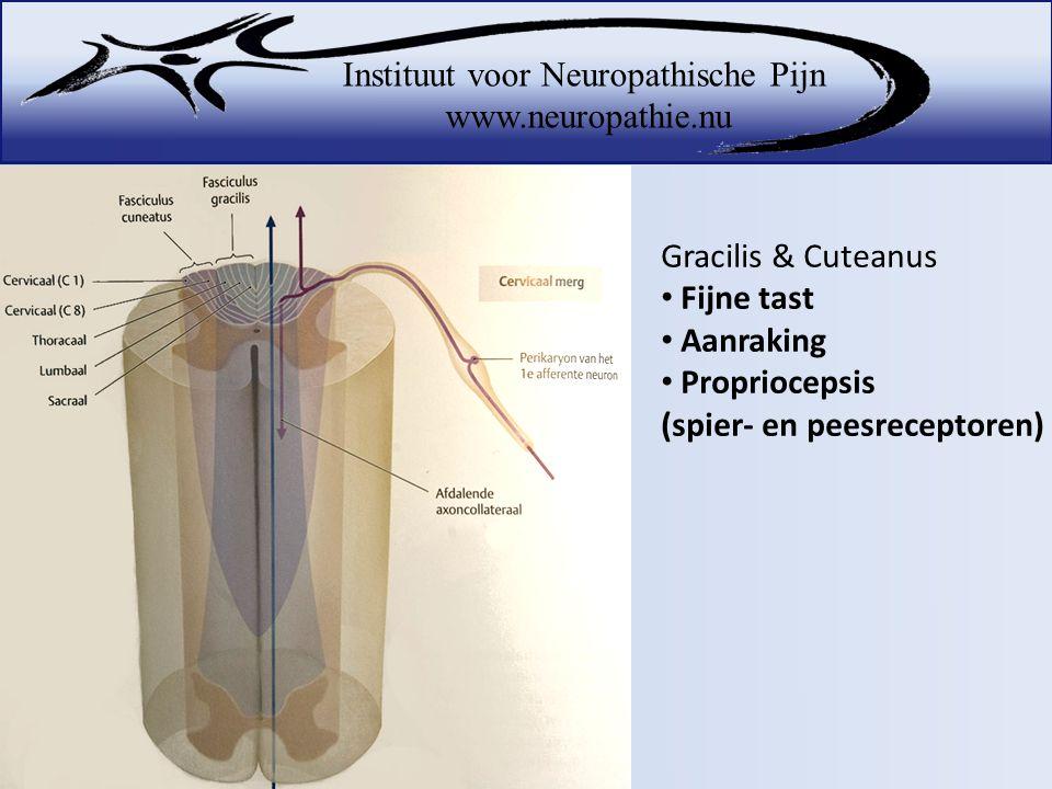 Propriocepsis (spier- en peesreceptoren)
