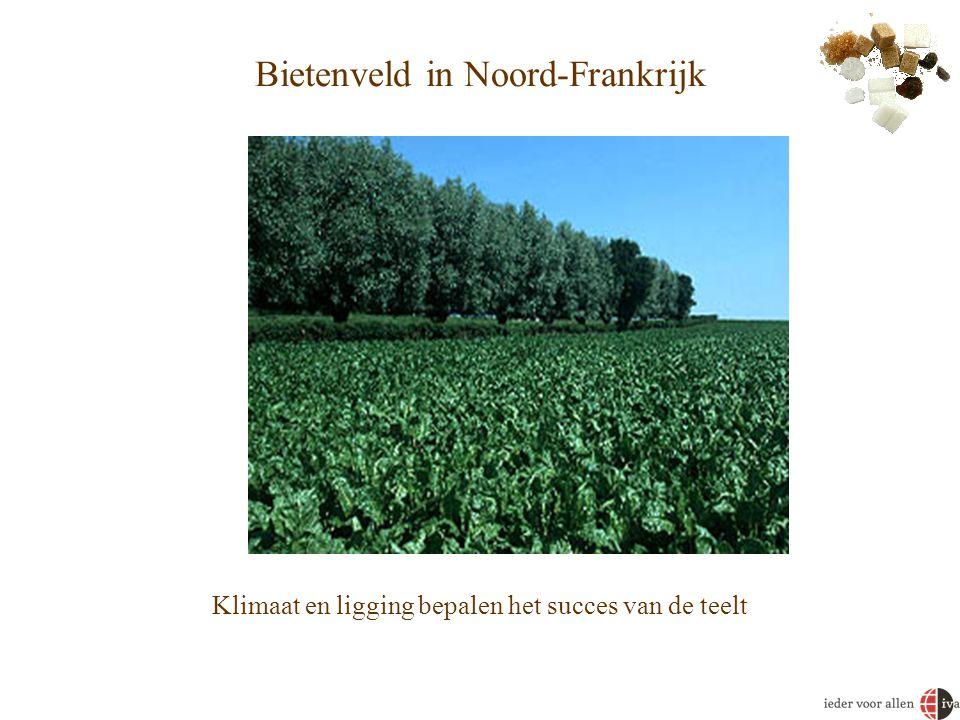 Bietenveld in Noord-Frankrijk Klimaat en ligging bepalen het succes van de teelt