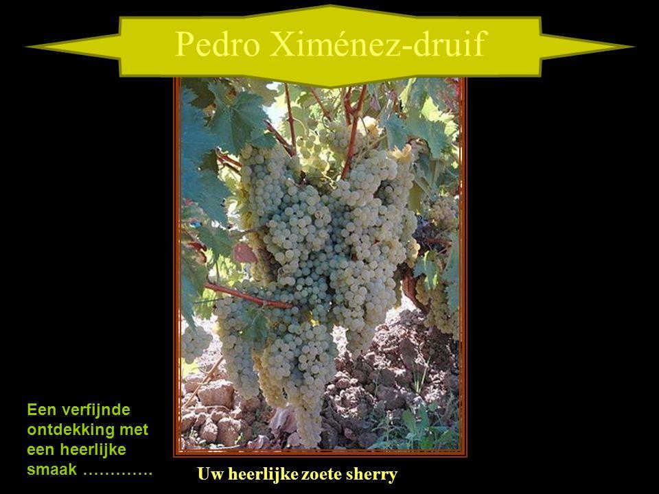 Pedro Ximénez-druif Uw heerlijke zoete sherry