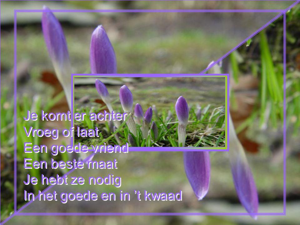 Je komt er achter Vroeg of laat Een goede vriend Een beste maat Je hebt ze nodig In het goede en in 't kwaad