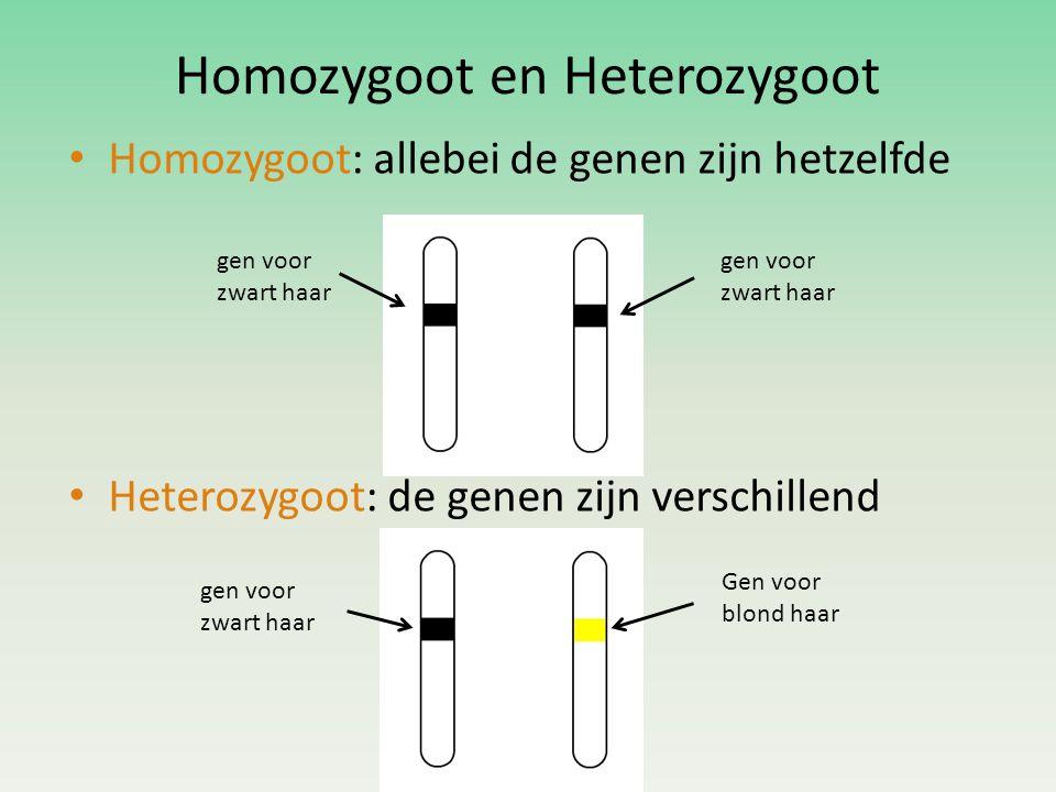 Homozygoot en Heterozygoot