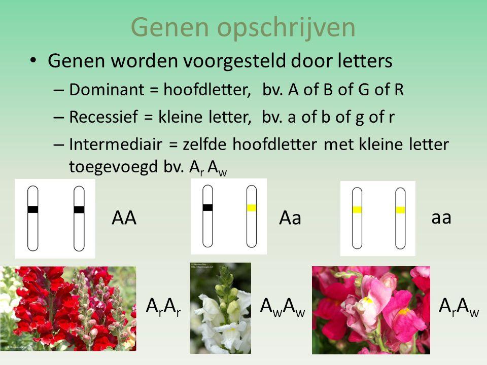 Genen opschrijven Genen worden voorgesteld door letters AA Aa aa ArAr