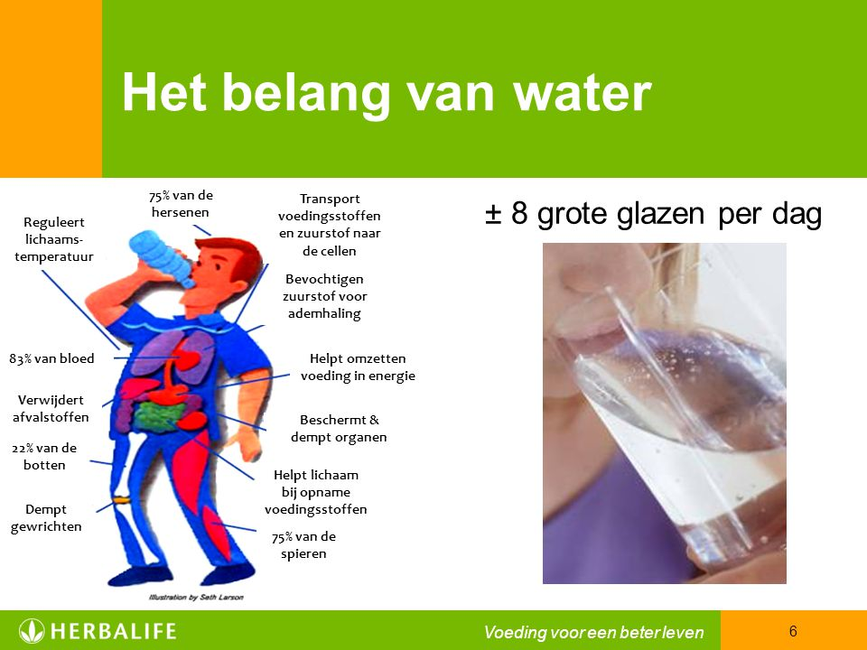 Het belang van water ± 8 grote glazen per dag