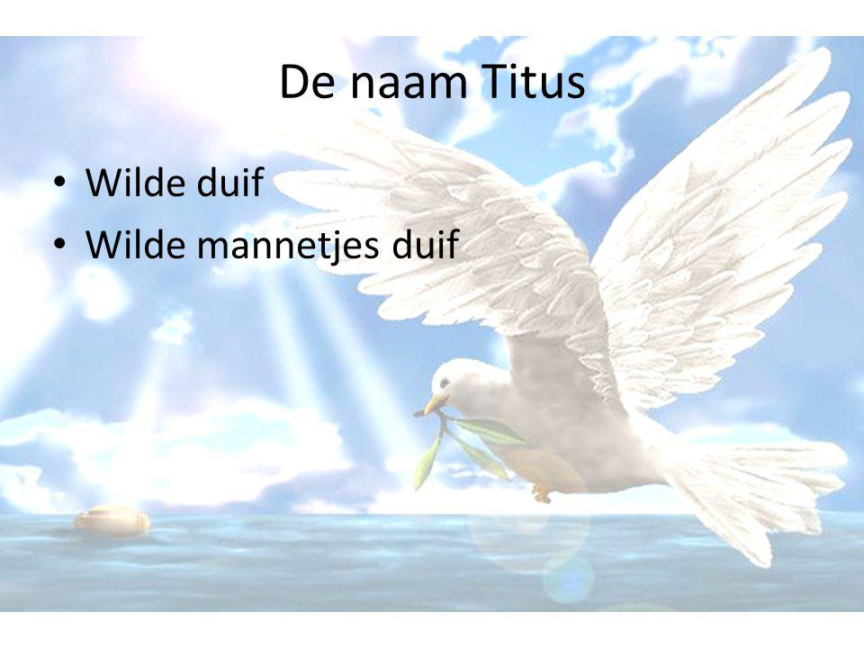 De naam Titus Wilde duif Wilde mannetjes duif