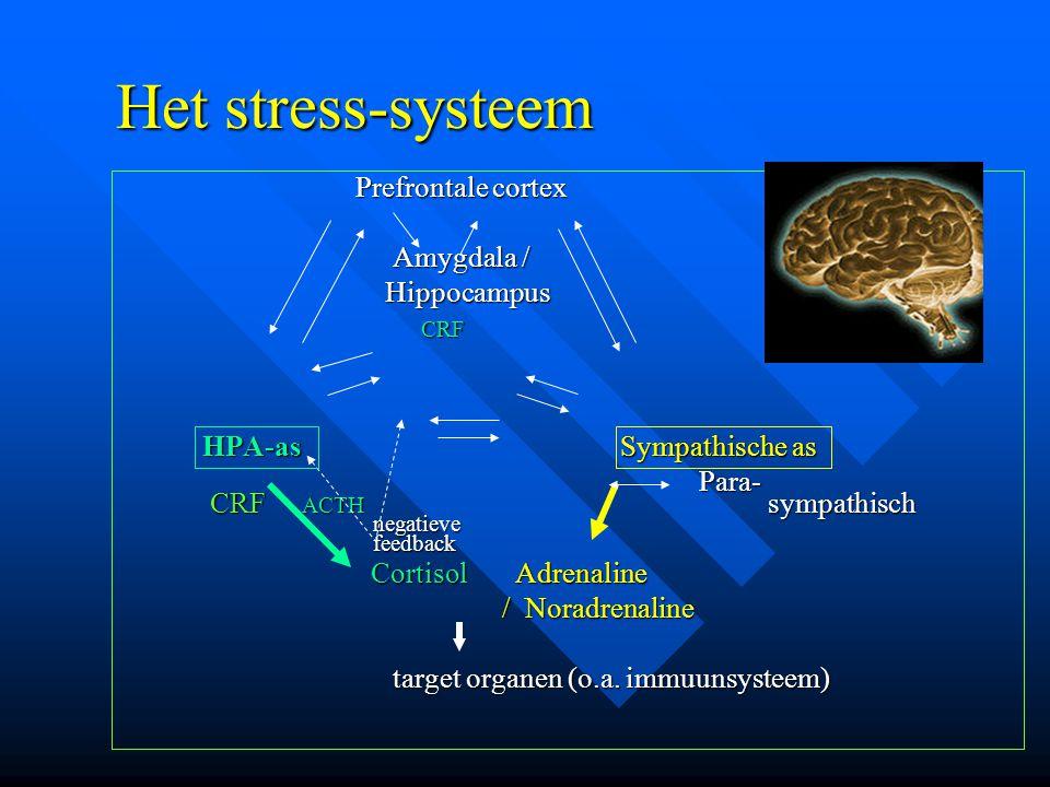 Het stress-systeem Prefrontale cortex Amygdala / Hippocampus CRF