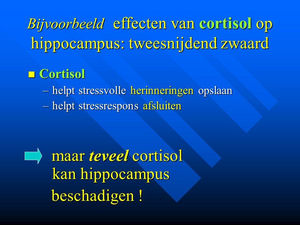 Bijvoorbeeld effecten van cortisol op hippocampus: tweesnijdend zwaard