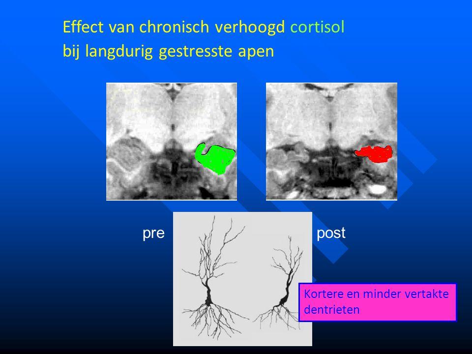 Effect van chronisch verhoogd cortisol bij langdurig gestresste apen
