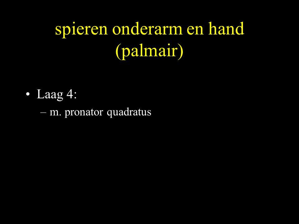 spieren onderarm en hand (palmair)