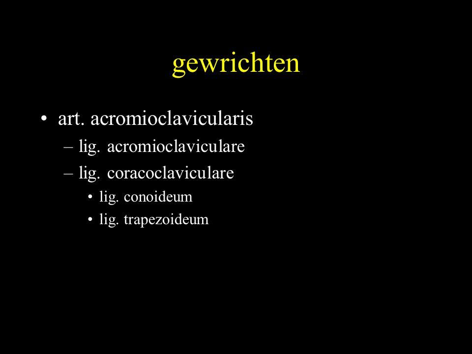 gewrichten art. acromioclavicularis lig. acromioclaviculare
