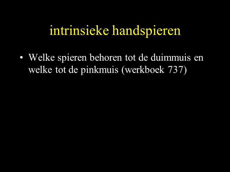intrinsieke handspieren