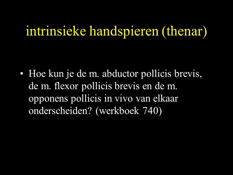intrinsieke handspieren (thenar)