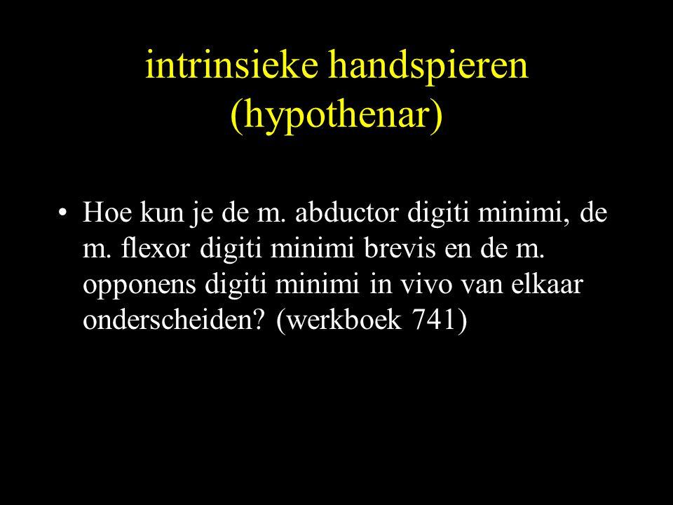 intrinsieke handspieren (hypothenar)