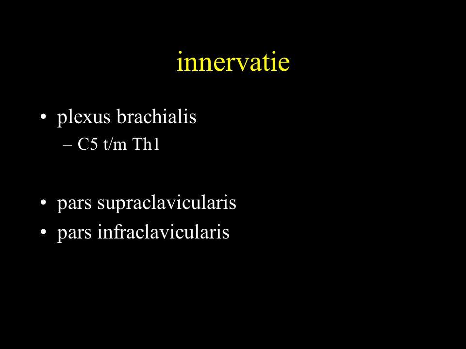 innervatie plexus brachialis pars supraclavicularis