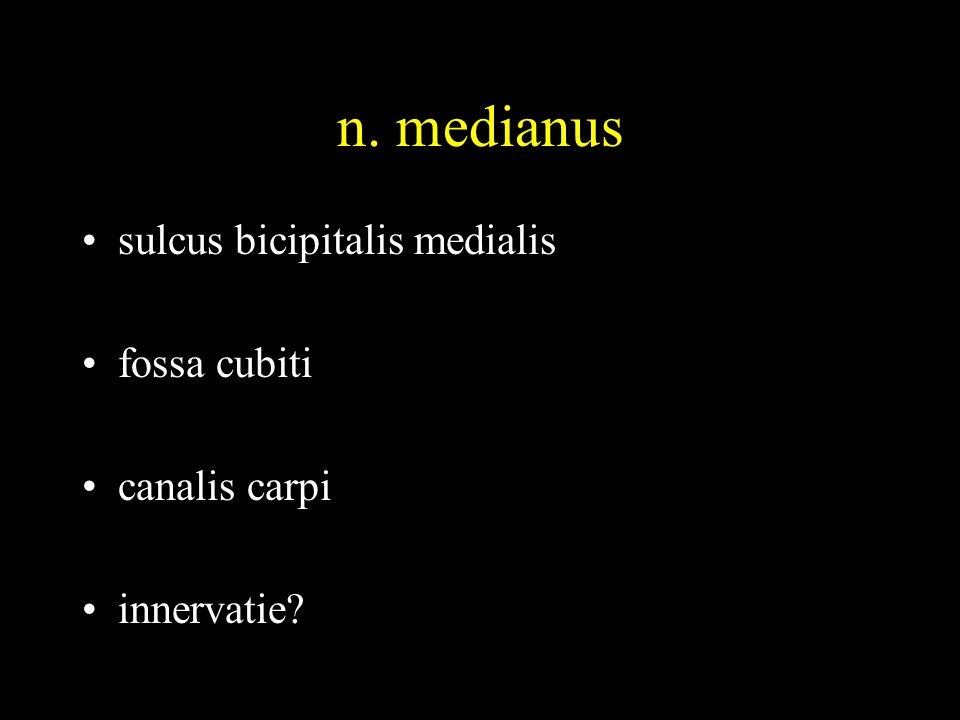 n. medianus sulcus bicipitalis medialis fossa cubiti canalis carpi