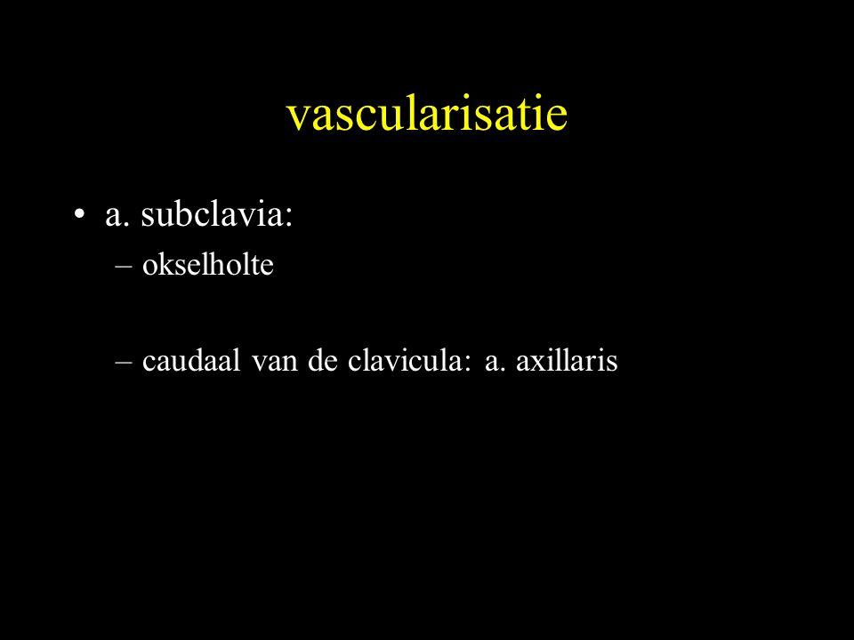vascularisatie a. subclavia: okselholte
