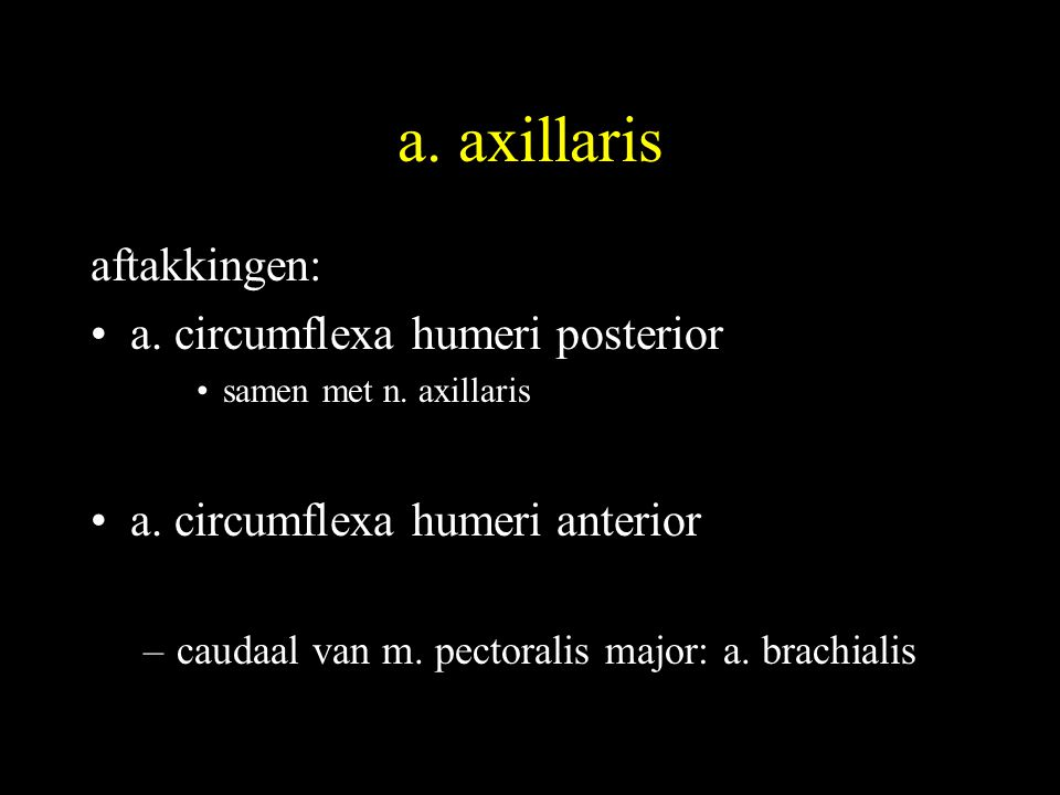 a. axillaris aftakkingen: a. circumflexa humeri posterior