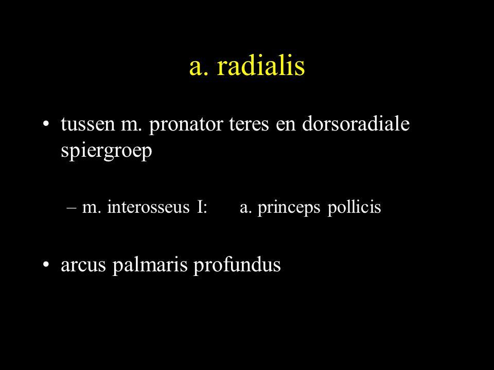 a. radialis tussen m. pronator teres en dorsoradiale spiergroep