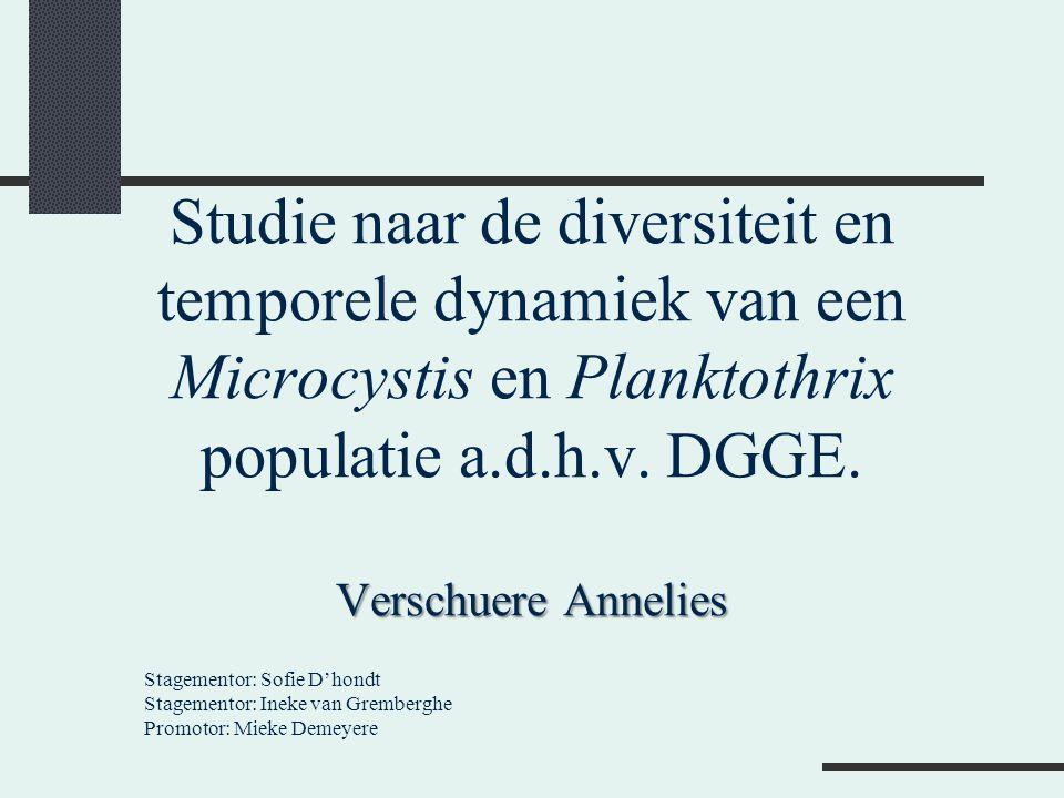 Studie naar de diversiteit en temporele dynamiek van een Microcystis en Planktothrix populatie a.d.h.v. DGGE. Verschuere Annelies
